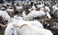 Prices of rams increase in Minna  NAN Survey