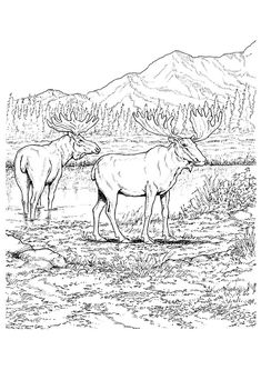 10 amazing elk coloring pages for your toddler - House Coloring Pages Toddlers