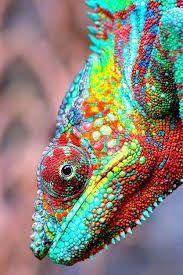 Resultado de imagen para camaleon puntillismo