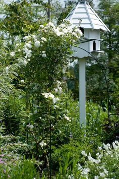 White wooden bird house next to garden arch with white climbing rose
