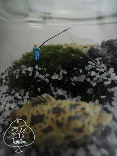 Fishing Terrarium   Find us on Facebook :: puff terrariums #puff #terrarium #home #work #sky #decor #decoration #plant #cactus #garden #cat #puppy #wedding #centerpiece #green #moss #gift #DIY #crafts #art #cute #jar #happy #bottle #yolo #lol #hkig