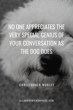 Our dogs are our best friends in the world without a doubt. Show your love and appreciation for these adorable doggos with these 21 inspiring dog quotes. Best Dog Quotes, Dog Quotes Love, Cute Quotes, Funny Quotes, Love You More Than, Just Love, I Love Dogs, Puppy Love, Heart Warming Quotes