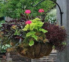 Aprende los secretos para combinar plantas en macetas o jardineras  Con todo el acceso...