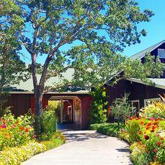 Wine Portal #napa #napavalley #rutherford #yountville #sthelena #california #wine #winery #winetasting #vineyard #mummnapa #zinfandel #chardonnay  #champagne #bubbles #bubbly #cheers #celebrate #bestoftheday #naturelovers #nature #awesomeearth #bestnatureshot #visitnapa #visitnapavalley #visitca #travel #cool #fun #amazing by kendollyloves