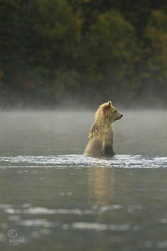 njwight:    Casper the Bear Cub