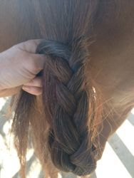 Use a mud knot to keep your horse's tail clean in gross weather