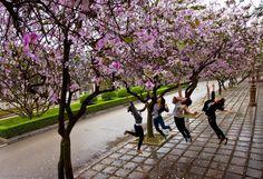 Ban season in Hanoi, Vietnam Vietnam Tours, Hanoi Vietnam, Beautiful Vietnam, Other Countries, Cambodia, Culture, Explore, Discovery, Flower
