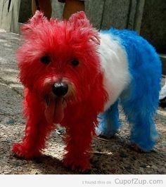 This pup sure is patriotic! #BIONIC www.bionicplay.com