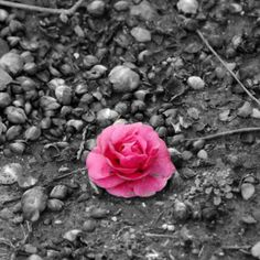 Black And White Photography With Color Splash Love Desktop Wallpapers HD