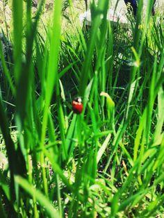 Uğur ♡ 1 Mayıs 2015 (Tunceli/Turkey)