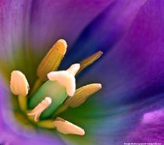 Beautiful Flowers up close