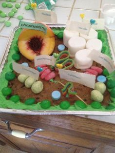 Plant cell 3d project