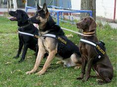 perros policias - Buscar con Google