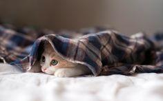 Kitten Under a Blanket Cute Kittens, Cats And Kittens, Kittens Playing, I Love Cats, Crazy Cats, Cute Baby Animals, Funny Animals, Wild Animals, Sleepy Kitten