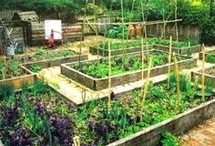 Raised Bed Vegetable Growing