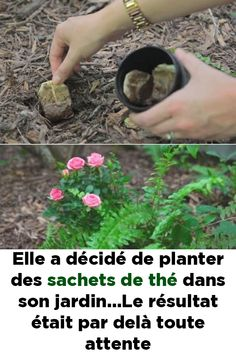 She decided to plant tea bags in her garden … The result exceeded … - Modern Deck Planters, Backyard Privacy, Painting Concrete, Blue Orchids, Horticulture, Vegetable Garden, Container Gardening, Sachets, Plant Bags