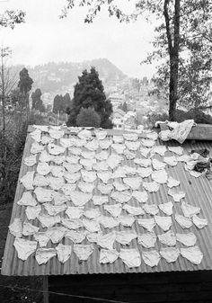 © Martin Parr/Magnum Photos INDIA. Darjeeling. St Paul's School. 1984.