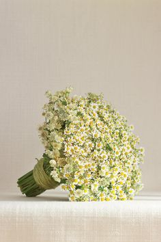 Sweet Simplicity Bouquet - Fresh Bridal Bouquets - Southernliving. Perfect for a barn wedding, a mass of chamomile and astrantia makes a big impact and is a smart choice for the budget-minded bride.    Love It? Get It! Haile Wossen of Anthos; 469-360-3648