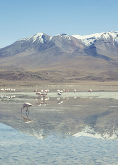 Flamingoes and montains. We used to see them every time we drove in the mountains!! Holy crap rush of memories!