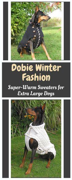 445 Best Dobermans Coats Collars Images In 2019 Doberman