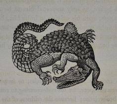 balnibarbi: Crocodile - Bewick's Fables 1820 small vignette by. Art And Illustration, Crocodile Illustration, Antique Illustration, Manga Comics, Crocodile Tattoo, Hugging Drawing, Desenho Tattoo, Best Tattoo Designs, Monster