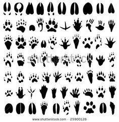 Paw prints for silhouette art.