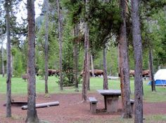 Yellowstone: Madison campground--this is the only campground I have stayed at in the park. We really enjoyed it, especially walking down to the madison river to see wild life. Yes, they wildlife walks through the campground too.