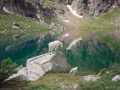 San Juan Mountains, Colorado, Sunlight Lake Mountain Goats, Photography by Jack Brauer