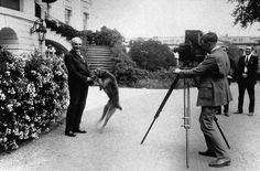 "Warren G. Harding with his Airedale ""Laddie""."