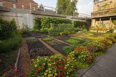 Rick Bayless' garden