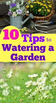 10 TIPS FOR WATERING A GARDEN.  No more guess work if your garden is getting enough water.  Learn 10 steps to watering a garden properly.  FREE formula for figuring out how much water is being put on your garden.