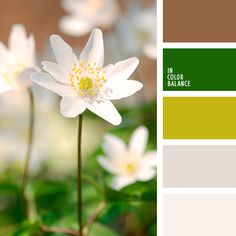 """""""пыльный"""" зеленый, """"пыльный"""" коричневый, бежевый, бежевый и бирюзовый, бледно-зеленый, зеленый, кремовый, нежные оттенки пастели, нежные пастельные тона, нежный бежевый, оливковый, оранжевый, оттенки бирюзового, оттенки зеленого, оттенки"""