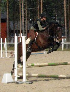 Finnhorse/Standardbred mare Palle-Pilkku (Red's Ball x Pilkin-Pilkku)
