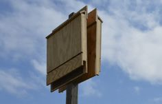 Want to get rid of those annoying mosquitoes? Hey, we can leave it to the bats! Build your own bat house and raise your own colony at home!