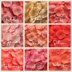 Many shades of coral silk rose petals available a coral theme wedding Wedding Themes, Wedding Venues, Wedding Decorations, Wedding Mandap, Stage Decorations, Wedding Stage, Watermelon Wedding, Coral Wedding Colors, Rosa Coral