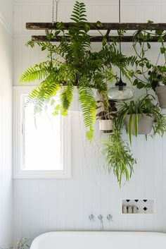 "Katie has to be careful with her indoor plants, as her cats love to play with them! These on the hanging ladder above the tub are safe from their sneaky paws. ""This project took my dad a full day of measuring, re-measuring and measuring again. He did a fantastic job and perfectly executed my big idea."""