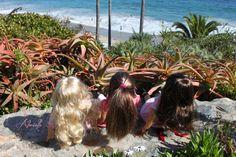 Beach Trip with Daniella