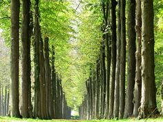 Soest, The Netherlands. Green show.