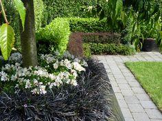 Black mondo grass & alstroemerias, with formal layered hedge | HEDGE Garden Design & Nursery