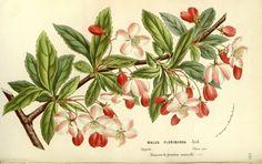 v.15 (1862-65) - Flore des serres et des jardins de l'Europe - Biodiversity Heritage Library