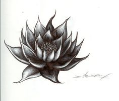 water lily tatto drawings - Google Search