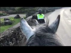 March Here's hoping the fine weather is here to stay for a wee while. We took Charlie and Comanche out for a quick spin around our village. March 3rd, Horses, Pets, Animals, Animaux, Horse, Animal, Animales, Animais
