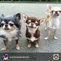 Nice dogssss