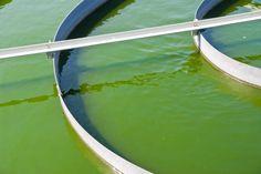 Aurora Biofuels