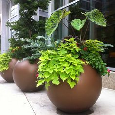 Globe Indoor and Outdoor Planter Pot - - Round Planter Pots - Jay Scotts Collection - Pots Planters & More - 3