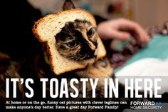 Happy #Thursday! #cat #baking #bread #food #animal #pet