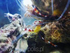 www.aqua-polis.pl Caribbean, Aquarium, Coral, Fish, Pets, Animals, Goldfish Bowl, Aquarius, Animaux