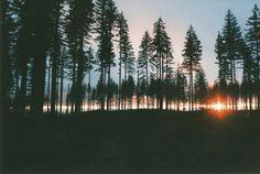 magicsystem: Logging road adventures (by tre.dreams)