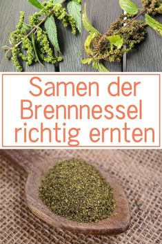 Medicinal Plants, Go Green, Agriculture, Diy Beauty, How To Dry Basil, Herbalism, The Cure, Healthy Living, Tips