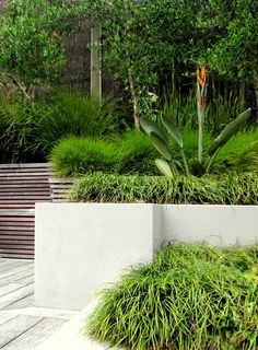 1000 images about seed landscapes on pinterest auckland for Landscaping auckland